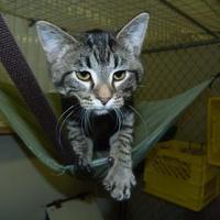Adopt A Pet :: Cordelia - Meadow Lake, SK