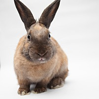 Adopt A Pet :: Coriander - Los Angeles, CA