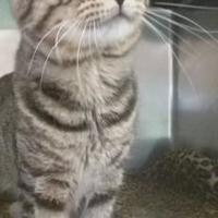 Adopt A Pet :: Rhubarb - Ashtabula, OH
