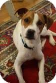 Terrier (Unknown Type, Medium)/Setter (Unknown Type) Mix Dog for adoption in Marietta, Georgia - Benji