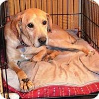 Adopt A Pet :: Tucker ($200 Fee- He's Great) - Staunton, VA