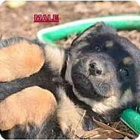 Adopt A Pet :: Baron - New Boston, NH