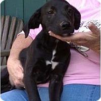 Adopt A Pet :: Dylan - Jackson, TN