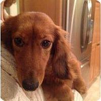 Adopt A Pet :: Skye- located in South Windsor - Killingworth, CT