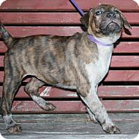 Adopt A Pet :: Helouise - Holland, MI