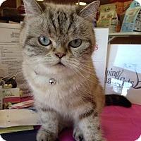 Adopt A Pet :: Simone - Beverly Hills, CA