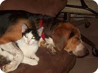 Beagle/Hound (Unknown Type) Mix Dog for adoption in Grand Saline, Texas - Snickers