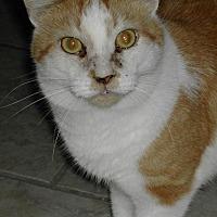 Adopt A Pet :: Sawyer - Naples, FL