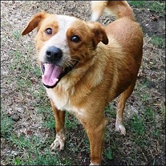 Retriever (Unknown Type) Mix Dog for adoption in Shreveport, Louisiana - Chance