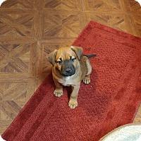 Adopt A Pet :: Bell - Emmett, MI