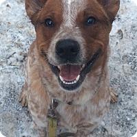 Adopt A Pet :: Superman! - Oak Ridge, NJ