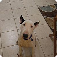 Adopt A Pet :: Miles - Houston, TX