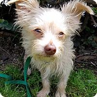 Adopt A Pet :: Norton - Los Angeles, CA