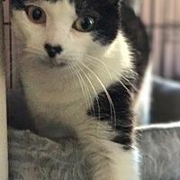 Adopt A Pet :: Mandy - Devon, PA