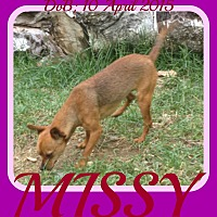 Adopt A Pet :: MISSY - Manchester, NH