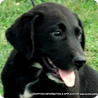 Adopt A Pet :: Alvin/ADOPTED - PRINCETON, KY