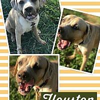 Adopt A Pet :: Houston - Unionville, VA