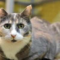 Adopt A Pet :: Nadia - Redmond, OR