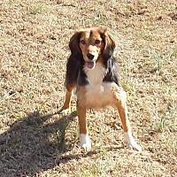 Adopt A Pet :: Melissa - Ashland, VA