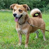 Adopt A Pet :: Rocco - Canterbury, CT