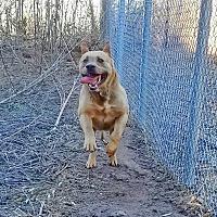 Adopt A Pet :: Dakota - Kingston, TN