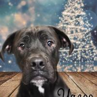 Adopt A Pet :: Yazoo - Gulfport, MS