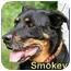Photo 2 - Rottweiler Mix Dog for adoption in Aldie, Virginia - Smokey