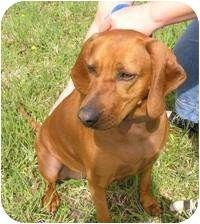 Redbone Coonhound Mix Dog for adoption in Creston, British Columbia - Becky