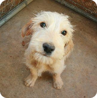 Terrier (Unknown Type, Medium) Mix Dog for adoption in San Antonio, Texas - Marco