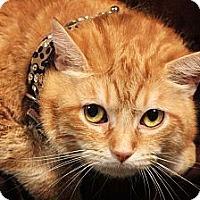 Adopt A Pet :: Morris - Kerrville, TX