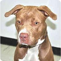 Adopt A Pet :: Law - Port Washington, NY