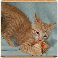 Adopt A Pet :: Adam - Bradenton, FL