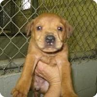 Adopt A Pet :: Lena - Rocky Mount, NC