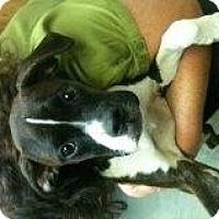 Adopt A Pet :: Dublyn - Alliance, NE