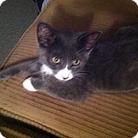 Adopt A Pet :: Calib - Riverside, RI