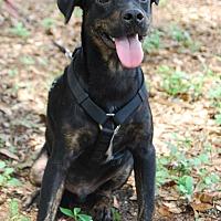 Adopt A Pet :: Tommie - Crawfordville, FL
