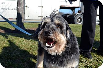 Tibetan Terrier Mix Dog for adoption in Norwalk, Connecticut - Bergdorf - Meet Him!!