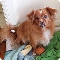 Adopt A Pet :: TEDDY - SO CALIF, CA