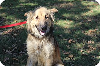 Collie/Shepherd (Unknown Type) Mix Dog for adoption in Conway, Arkansas - Radcliffe
