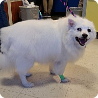 Adopt A Pet :: Sissy in CT - East Hartford, CT