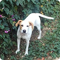 Adopt A Pet :: Lulu - Dana Point, CA