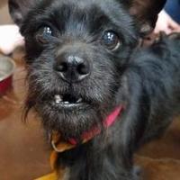 Adopt A Pet :: Blake - Bethany, OK