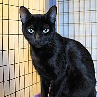 Adopt A Pet :: Ariel - Atlanta, GA