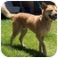 Photo 2 - Jindo/Shiba Inu Mix Dog for adoption in Marysville, California - Haru