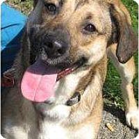 German Shepherd Dog Mix Dog for adoption in Salem, Ohio - Brittany
