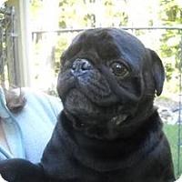 Adopt A Pet :: Winston - Fairfax, VA