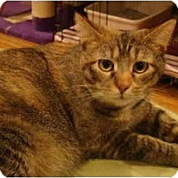 Adopt A Pet :: Lettie - Muncie, IN