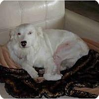 Adopt A Pet :: Cody - Mesa, AZ