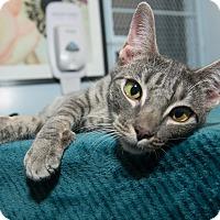 Adopt A Pet :: Hazelnut - New York, NY