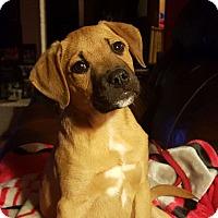 Adopt A Pet :: Ben - Knoxville, TN